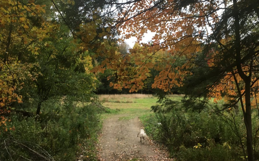 Pilgrimage Nature Walks – High Holidays